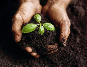 خرید گچ کشاورزی