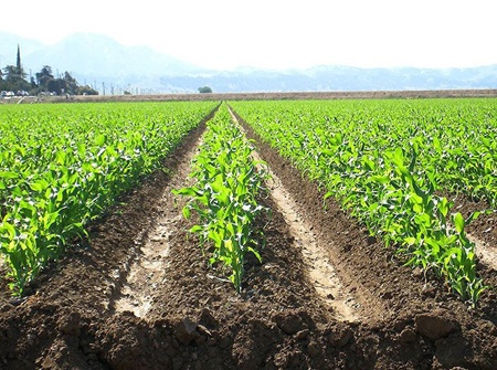 گچ کشاورزی